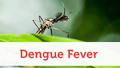 Photo of Dengue Fever Prevention