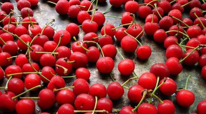 Photo of Cherry is healthy fruit