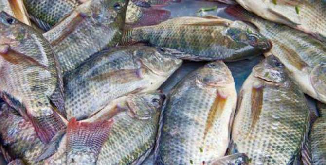 Fish benefits and types