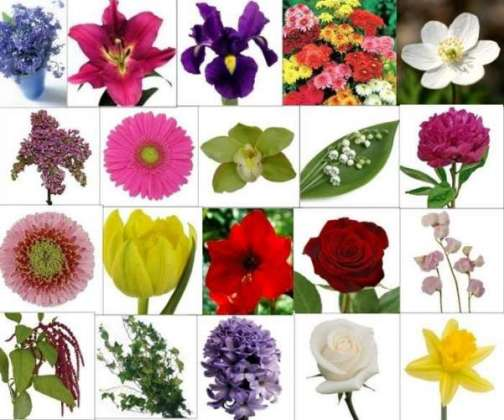 Flowers also include medicines