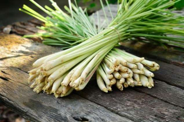Photo of Lemon Grass and its oil benefits